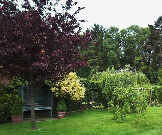 Mid Section Of Garden