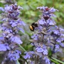 A bee collecting his tea.