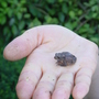 tiny toad on hand