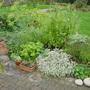 sage (Salvia officinalis (Common sage))