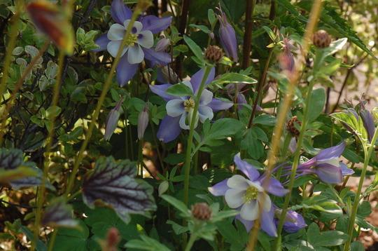 A. 'Winky Blue'.
