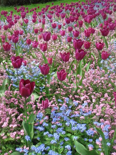 Victoria Embankment Gardens - April 2010