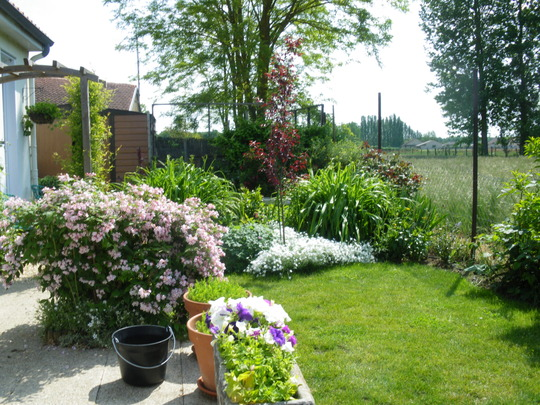 long view of the back garden