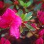 plants_018.jpg