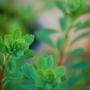 Plants_017