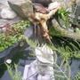 Garden_pics_2007_007