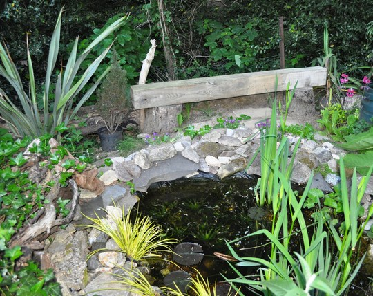 New bench by the pond