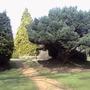 Heather gardens