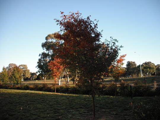 Canberra Colour! 3