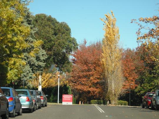 Canberra Colour! 4