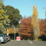 Canberra Colour! 4