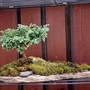 Bonsai landscape.
