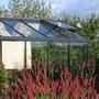 two pigeons on open window of greenhouse (Polygonum persicaria (Amplexicaule))