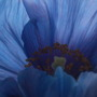 Beautiful_mecy..26th_may_10_017