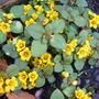 Flower_to_identify