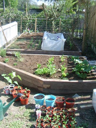 My veg garden photo 2