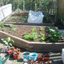 My veg garden photo 2