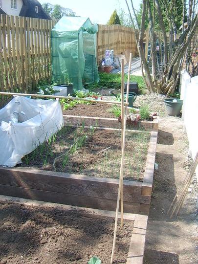 My veg garden photo 3