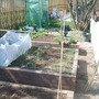My veg garden photo 3