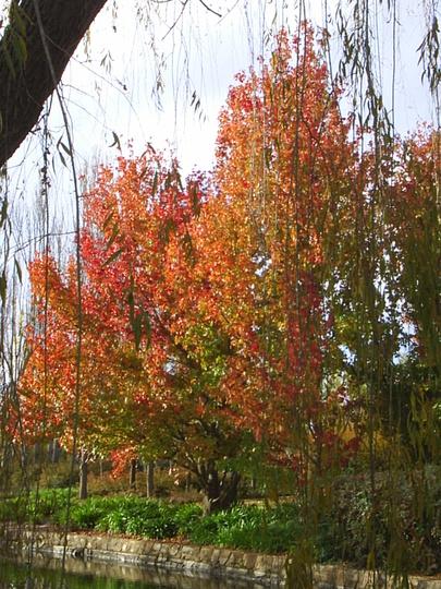 Canberra Colour! 9
