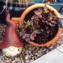 28_may_garden_2010_018