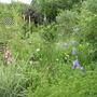 A bit of my garden.