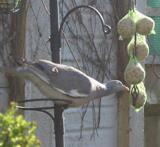 Finally --- a bird