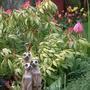 My Meercats