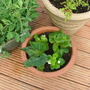 New_plants_in_pots_003