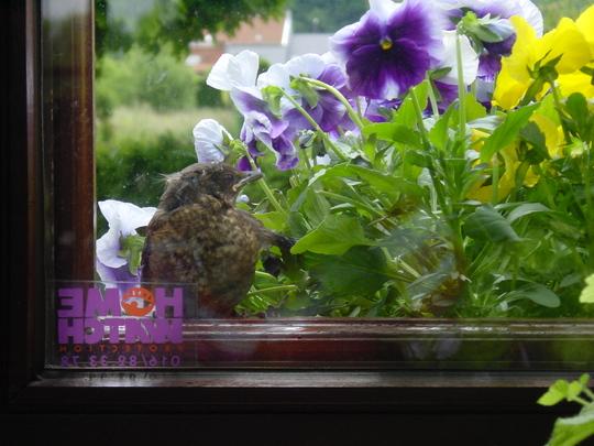 a bird  sitting against the window