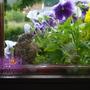 Vogeltje_tegen_raam