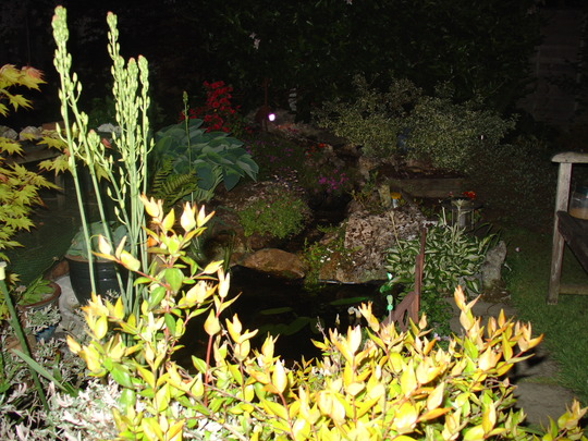 pond and waterfall at night
