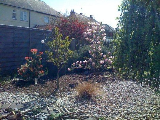 cherry and magnolia