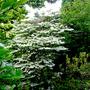 garden_flowers_for Linda 235