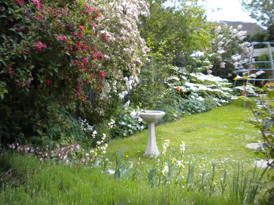 garden in its frothy stage