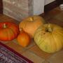 pumpkins in 2005