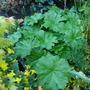 Plants_today_003