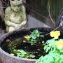 my water barrel pond