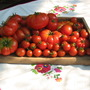Tomatoes Sweet Million, Marmande, Harzfeuer and Pata Negra,  August 8 th 2006