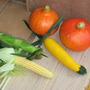 our first pumpkins, sweet corn and yellow squash in August 2006