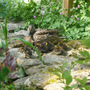 Ducklings arrive.