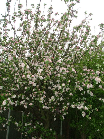 This year's blossom