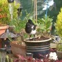 Baby magpie checking out the garden