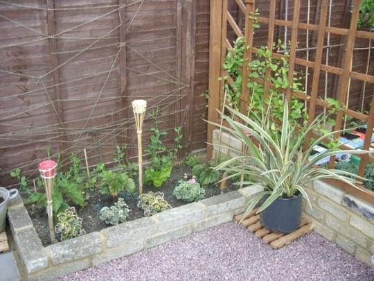 patio raised garden