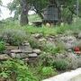 Thyme garden in flower