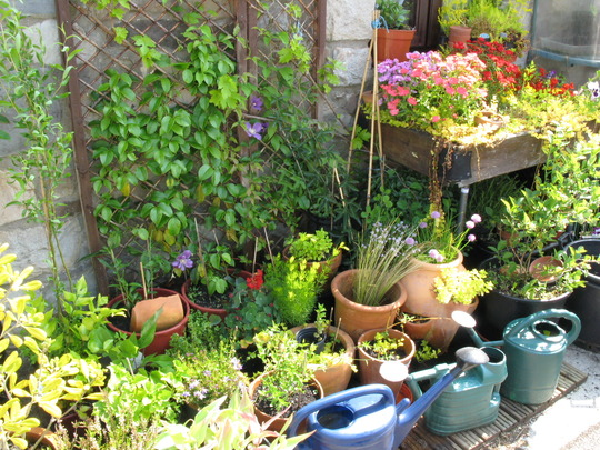 Small trellis and trolly n pots in the morning