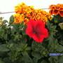 Garden_045