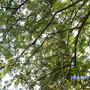 Garden_053