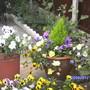 Garden_086