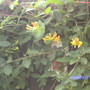 Garden_085